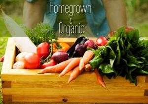 Organic-Blog-Pic